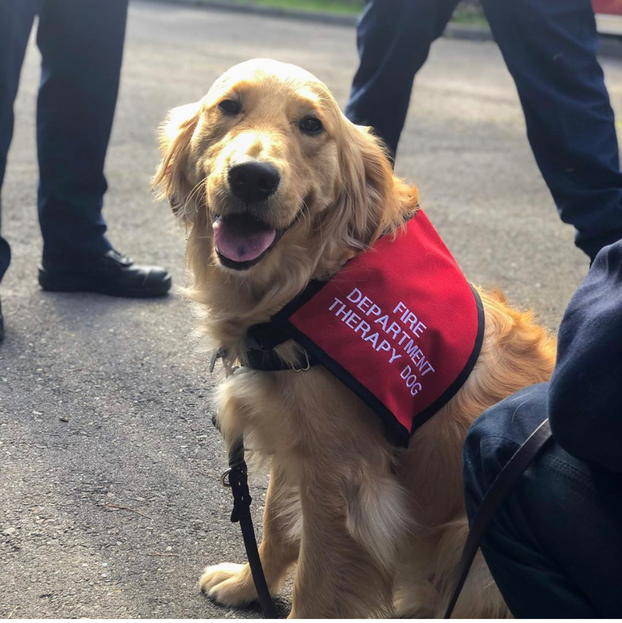 Kerith the therapy dog
