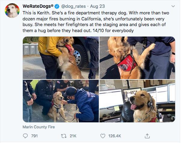 @dog_rates on Twitter